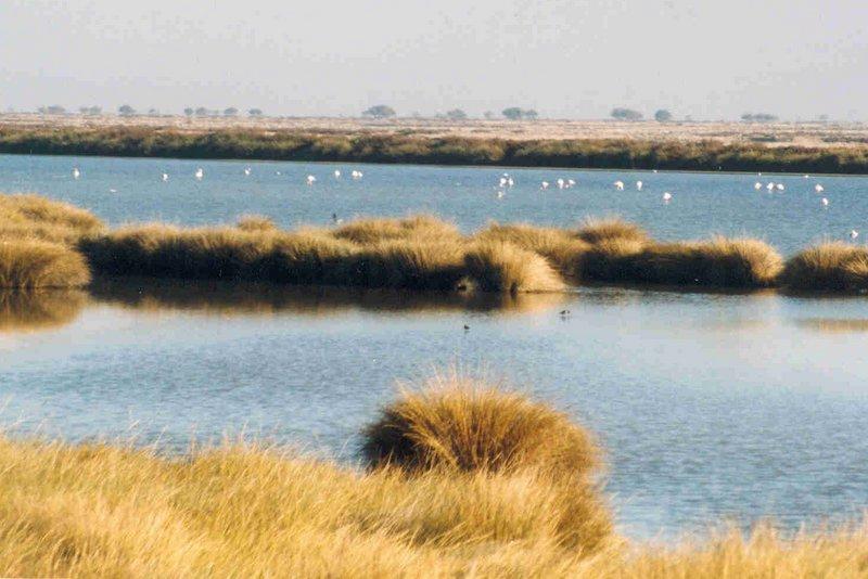 Spain travel Donana national park wetlands
