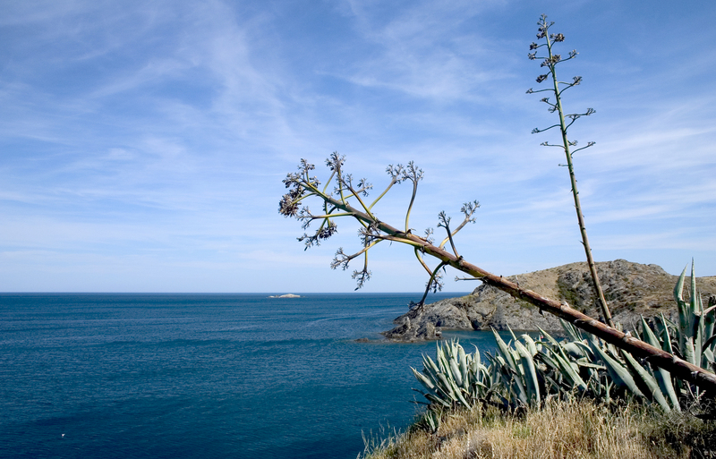 https://travelinspires.org/wp-content/uploads/2016/03/advemtire-tourism-catalonia-Agave-americana-in-Cap-de-Creus.jpg