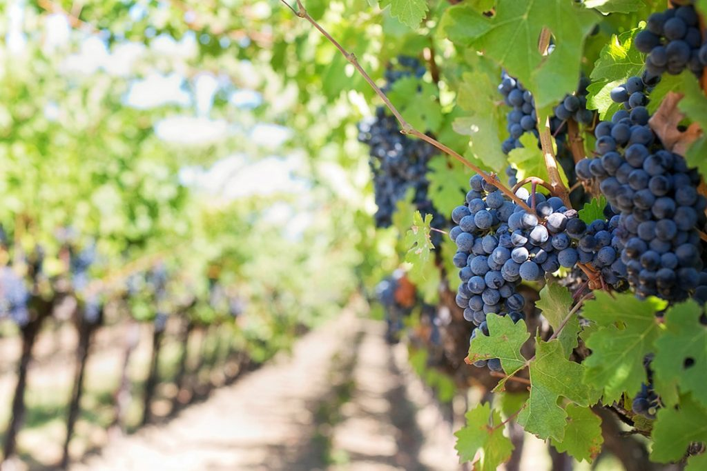 https://travelinspires.org/wp-content/uploads/2018/03/Castellon-wine-route-1024x683.jpg