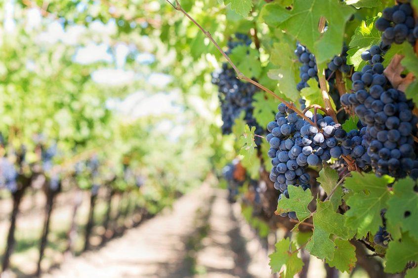 Castellon wine route
