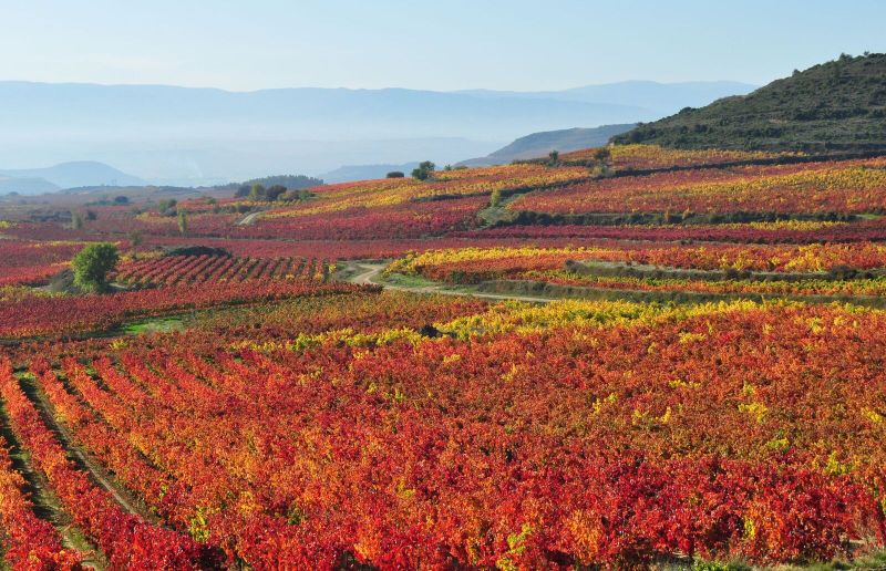 Rioja Spain holidays ©Thabuca Wine Tours-rioja-vineyards-autumn