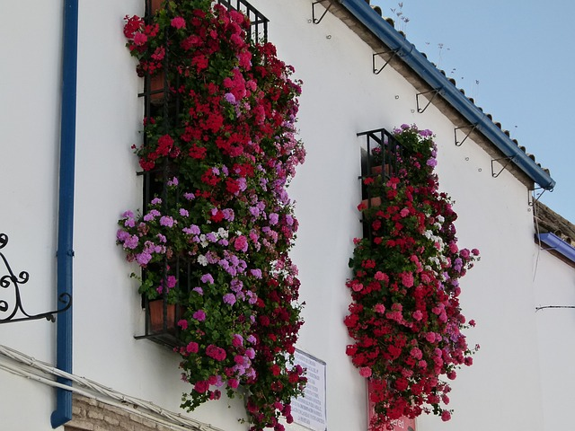 Spain beautiful cities Cordoba patios and flowers