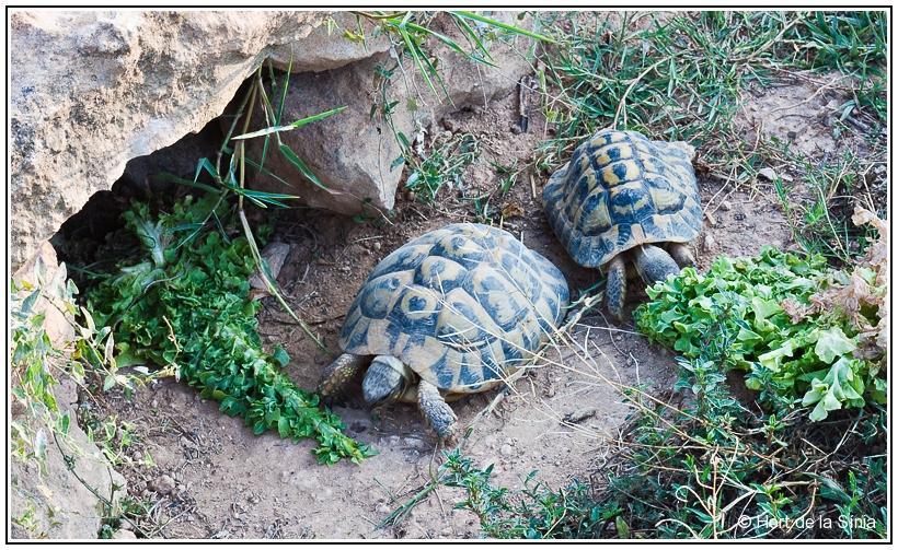 Tarragona Spain Hort de la Sinia earth turtles