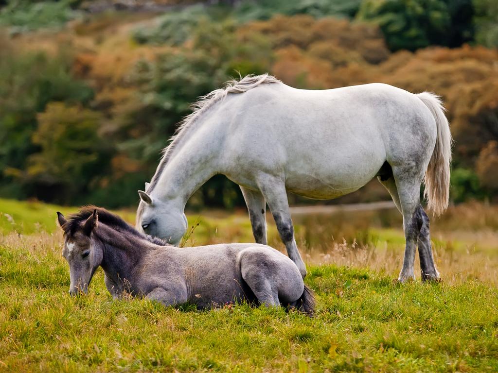 Galway beautiful places Connemara ponies