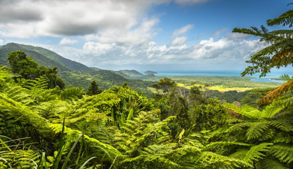 Australia places to visit-Daintree Rainforest tropical great barrier reef