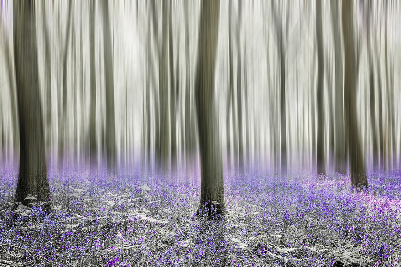 Chilterns places to go bluebell woods_2018_12