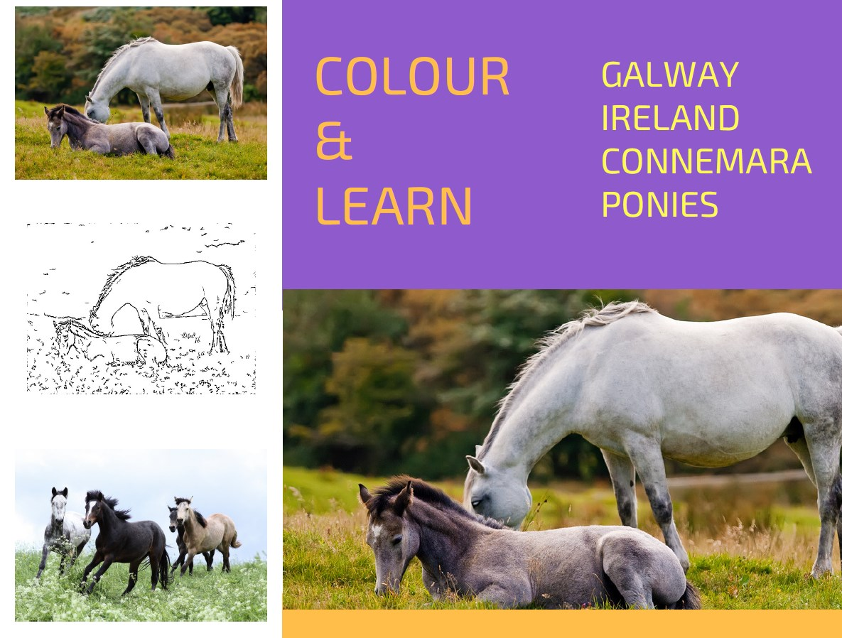 Connemara ponies free colouring page Colour & Learn Travel Inspires