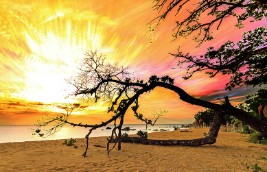 Madagascar tree at sunset