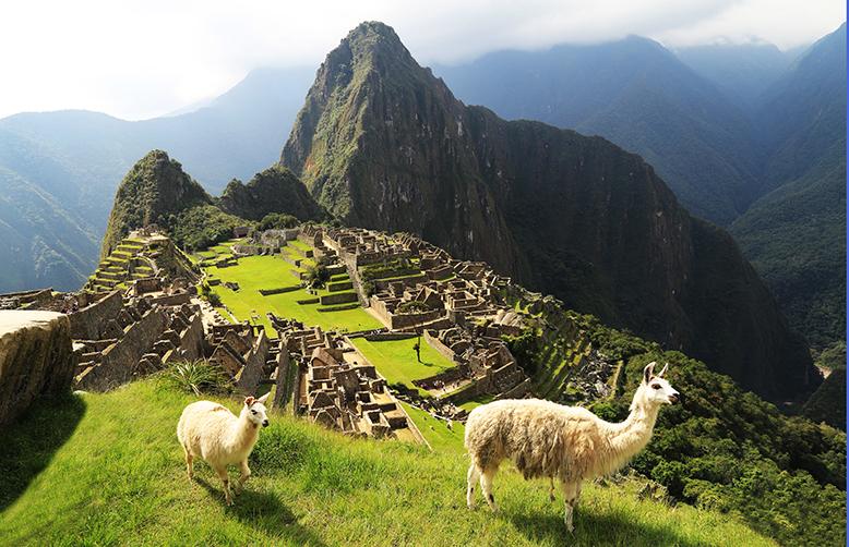 Peru-Llama at Machu Picchu