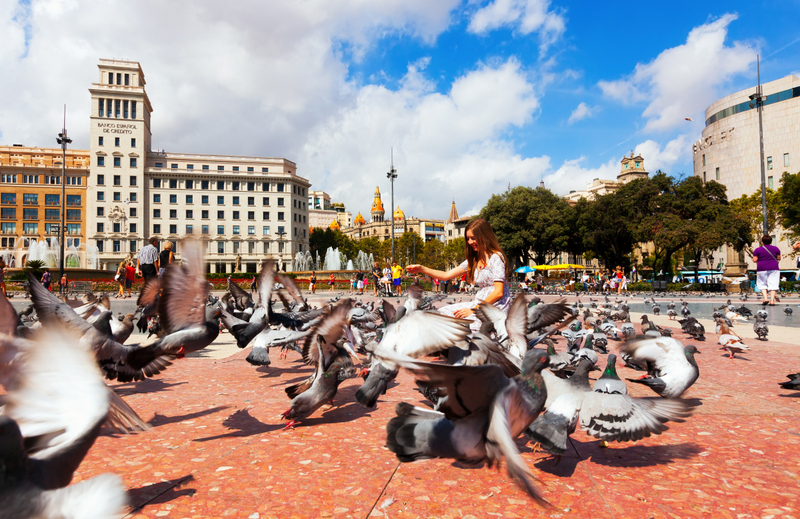 best route Madrid to Barcelona via Zaragoza pigeons Catalonia Square Barcelona