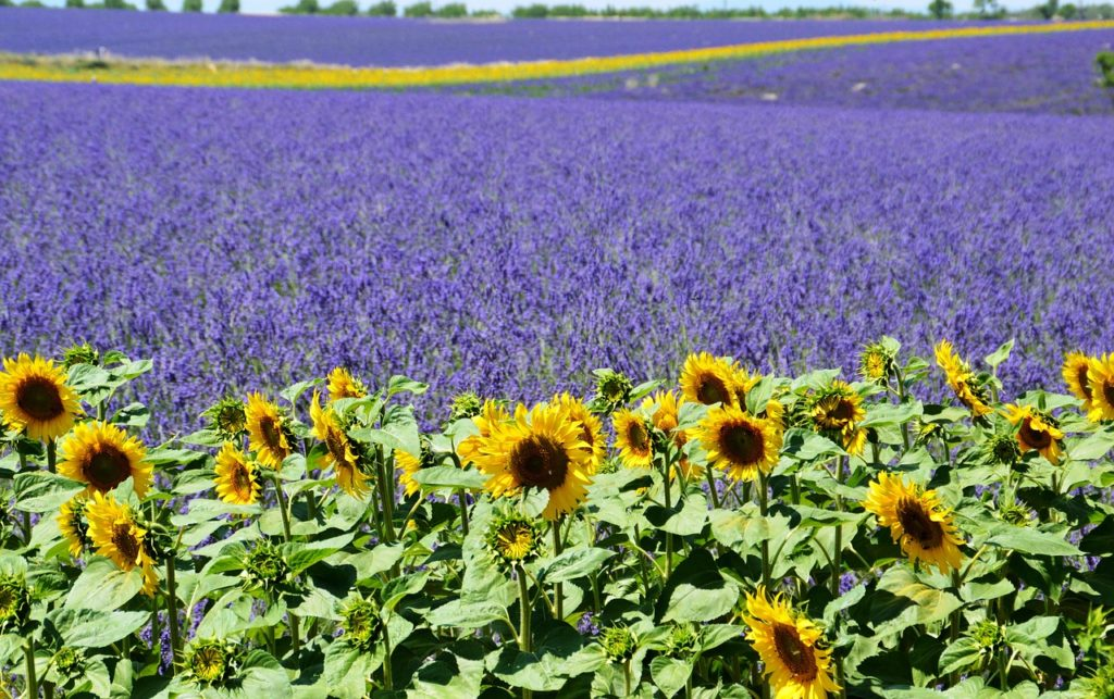 zodiac travel by star sign Valensole France Cancerians