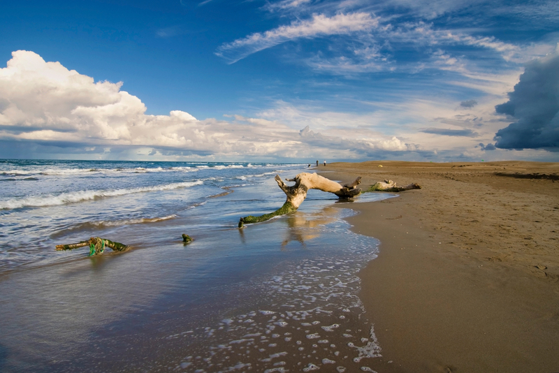 Delta de l'Ebre Beach With Log At Water