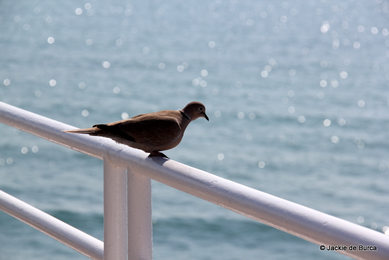 Sitges Bird Looking At Sea