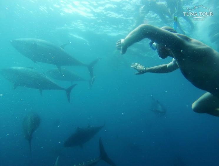 Tuna Tour L'Ametlla de Mar