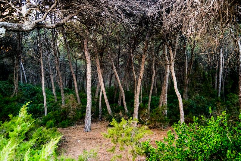 Tamarit-Punta de la Móra Enchanted Forest-wikipedia check