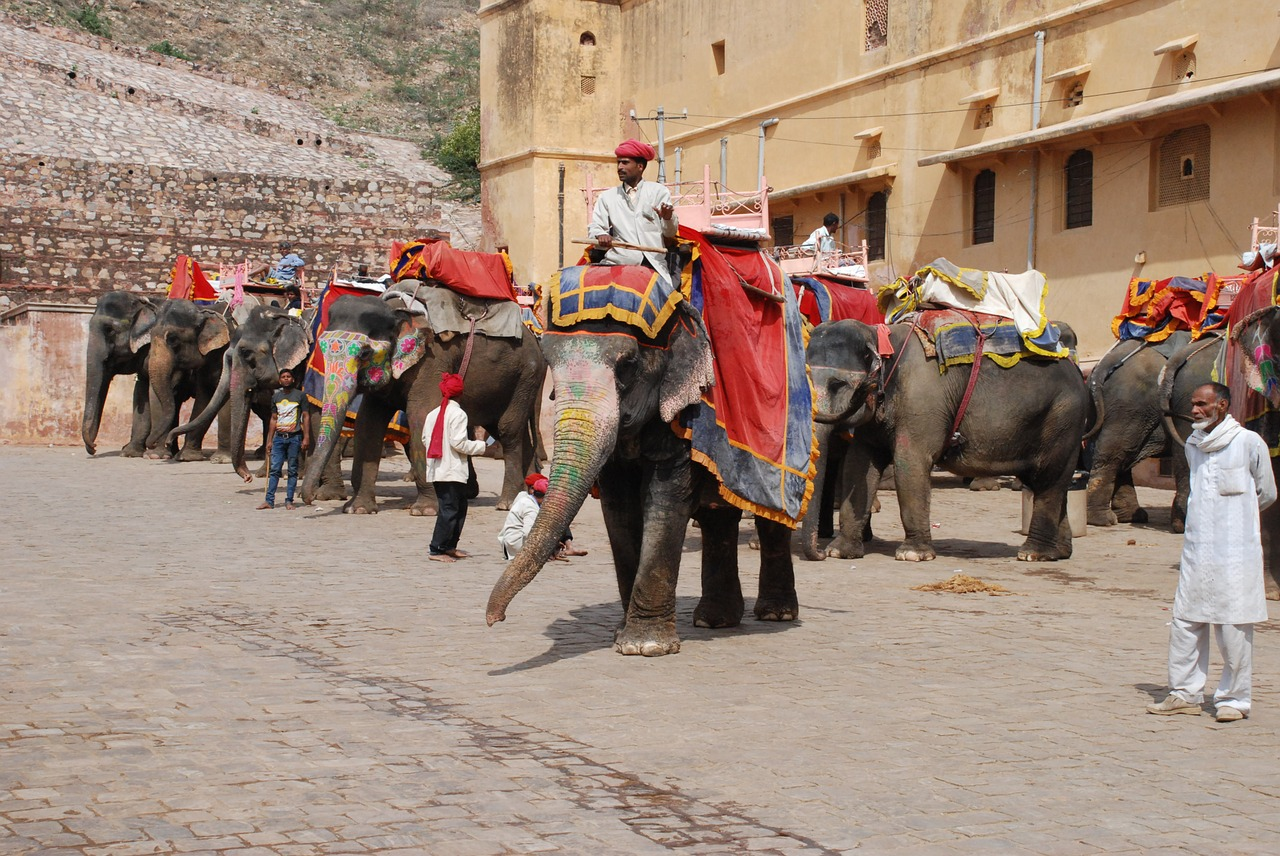Jaipur people and elephants at fort