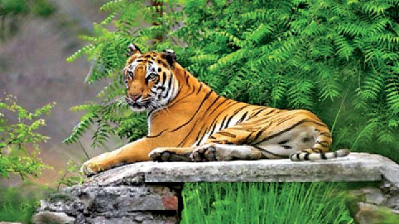 Sariska India tiger reserve