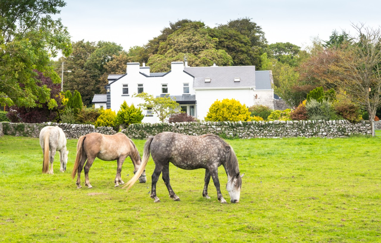 what to do outdoors Galway Horses grazing close to Kilbeg Pier on Lough Corrib