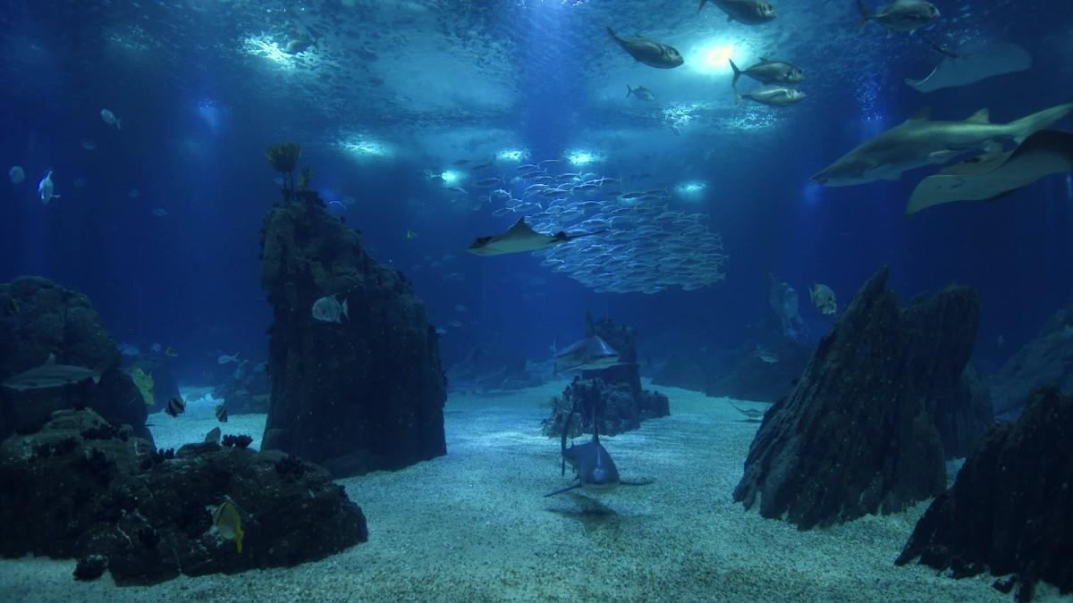 Lisbon for families-Lisbon's Oceanario Aquarium