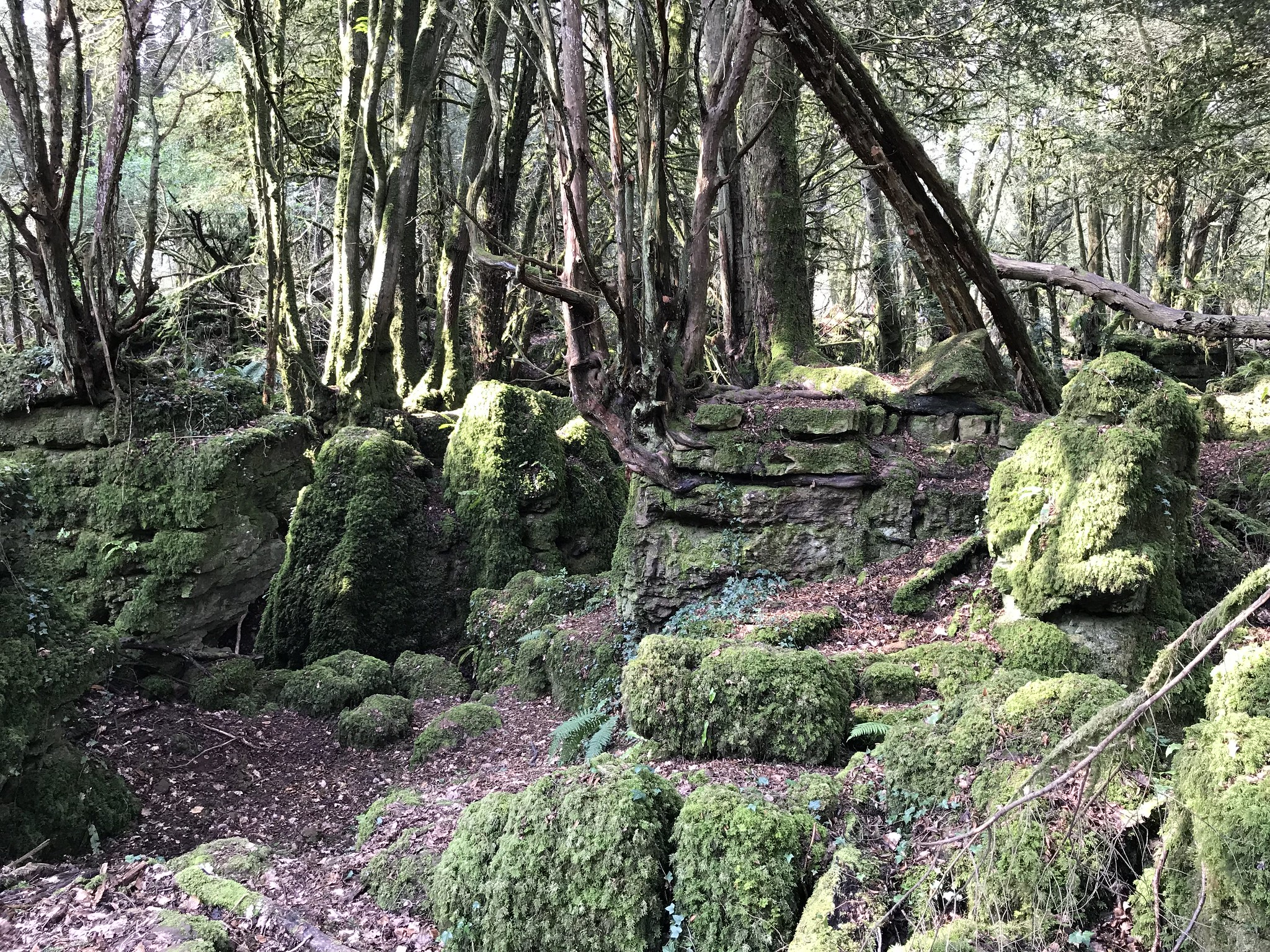 Puzzlewood Forest of Dean Gloucestershire