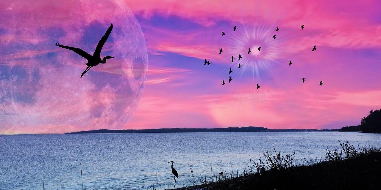 https://travelinspires.org/wp-content/uploads/2020/05/indigenous-tourism-british-columbia-vancouver-island-pink-sky-1280x853-1280x640.jpg