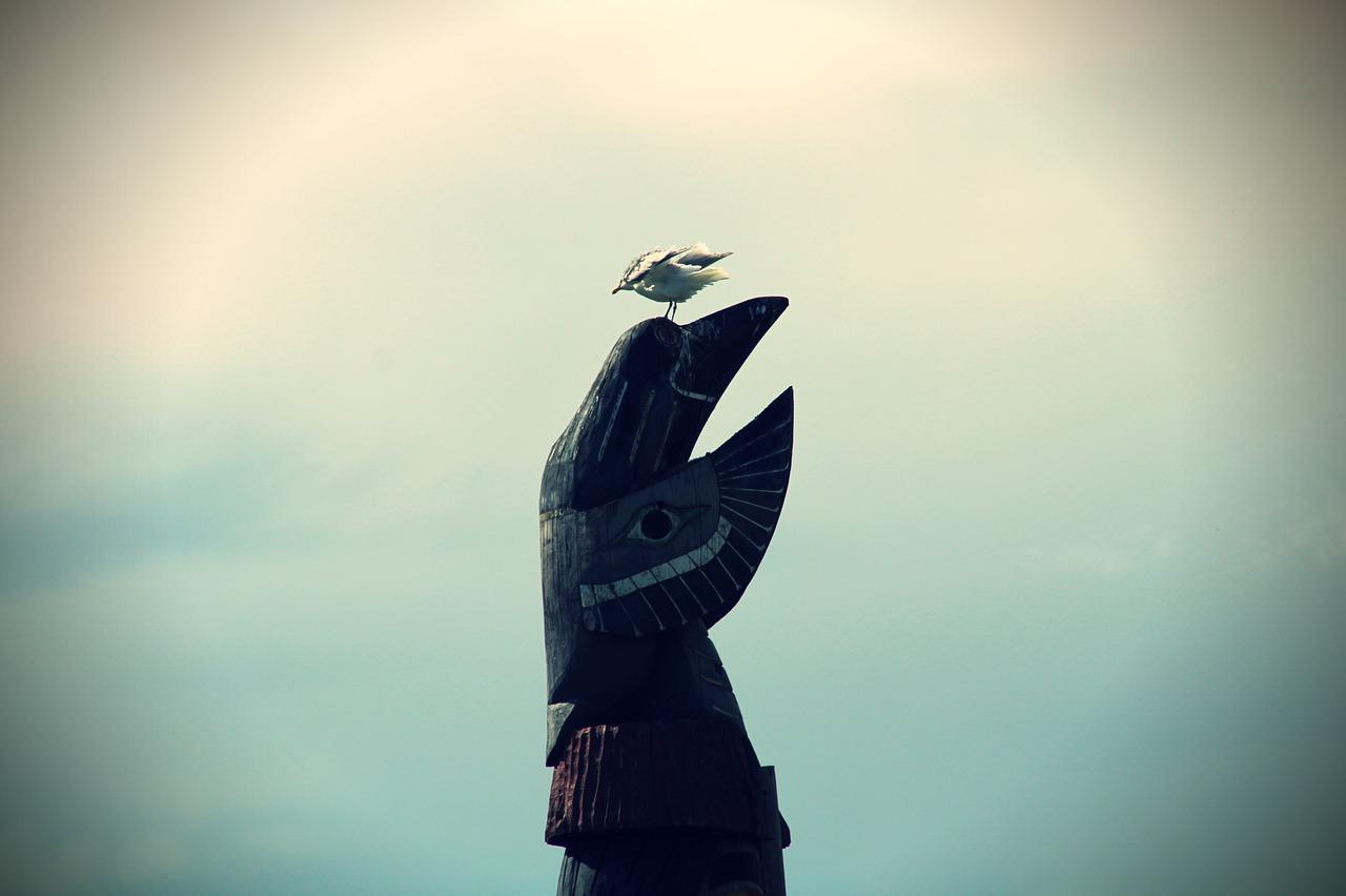 indigenous tourism british columbia vancouver island seagull (1)