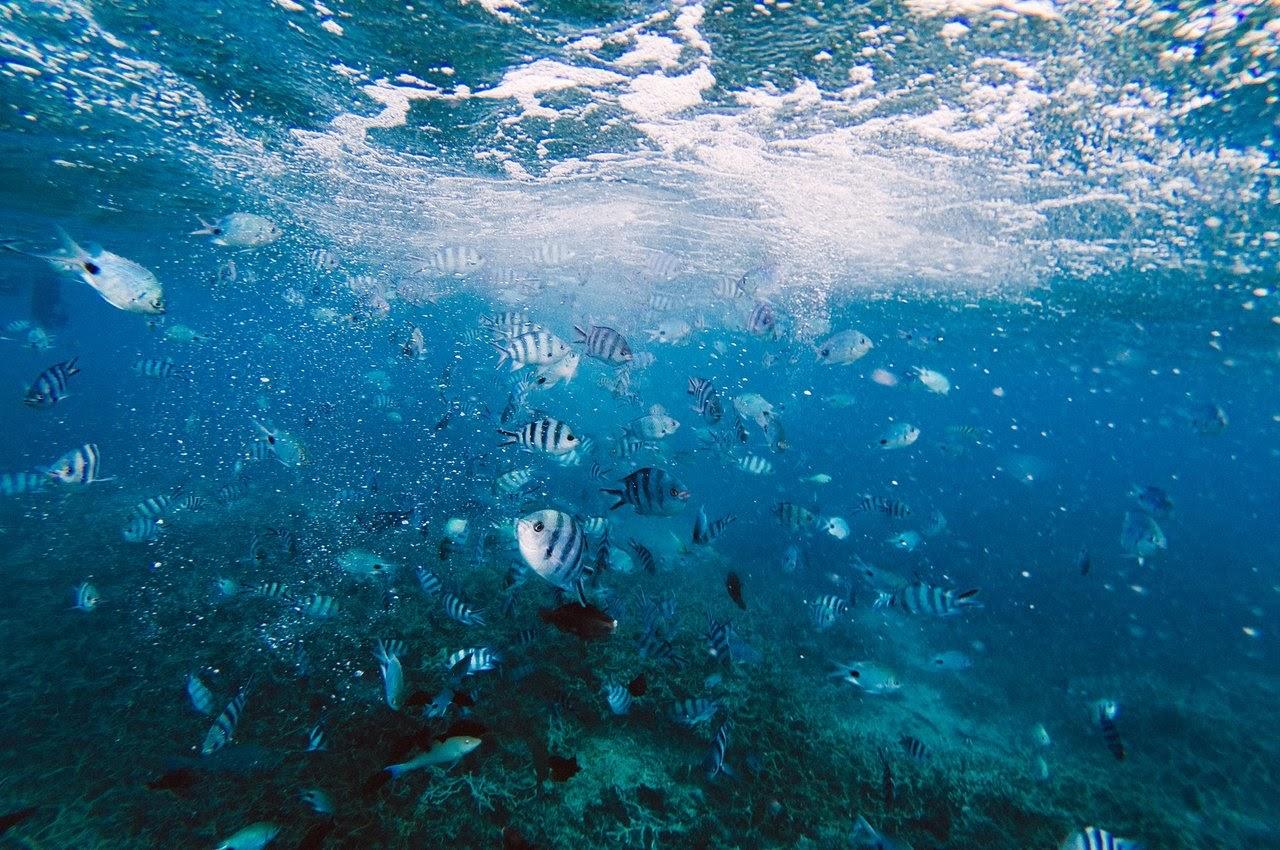 Explore marine life in Mauritius on your honeymoon