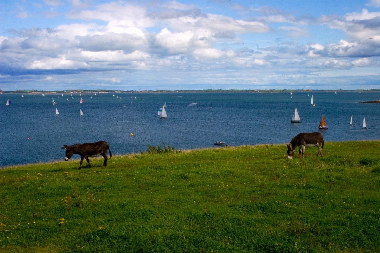 Strangford lough with artist Ann Smyth donkeys by water