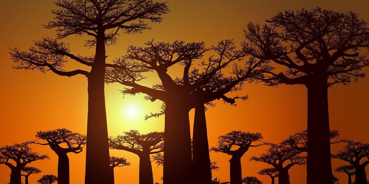 https://travelinspires.org/wp-content/uploads/2020/08/baobab-madagascar-1280x640.jpg