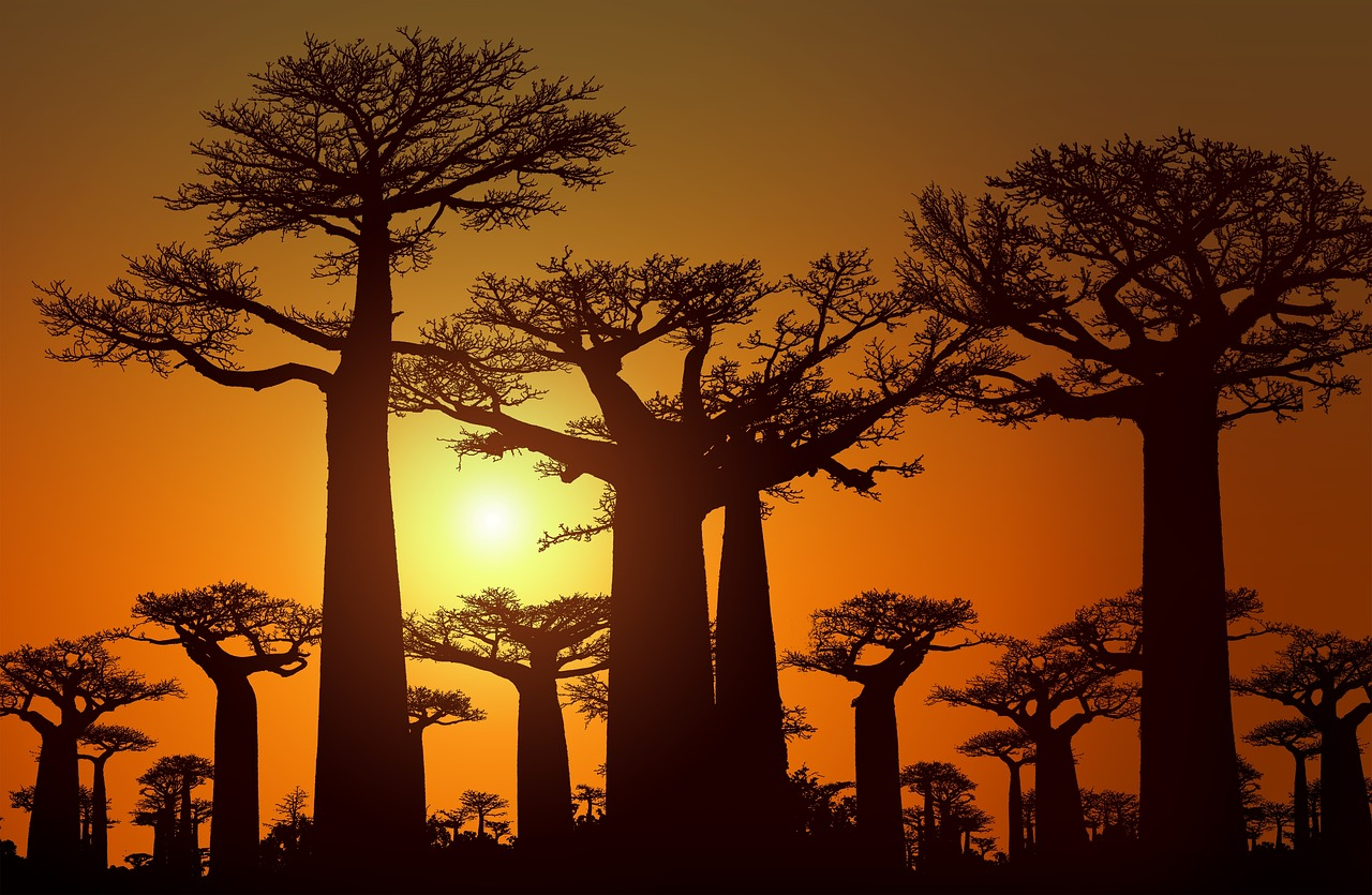 https://travelinspires.org/wp-content/uploads/2020/08/baobab-madagascar.jpg
