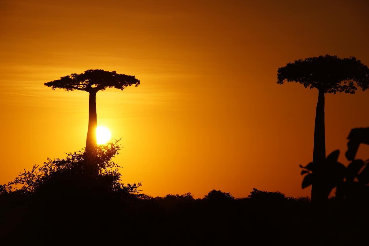 Sunset in the baobab alley - Madagascar