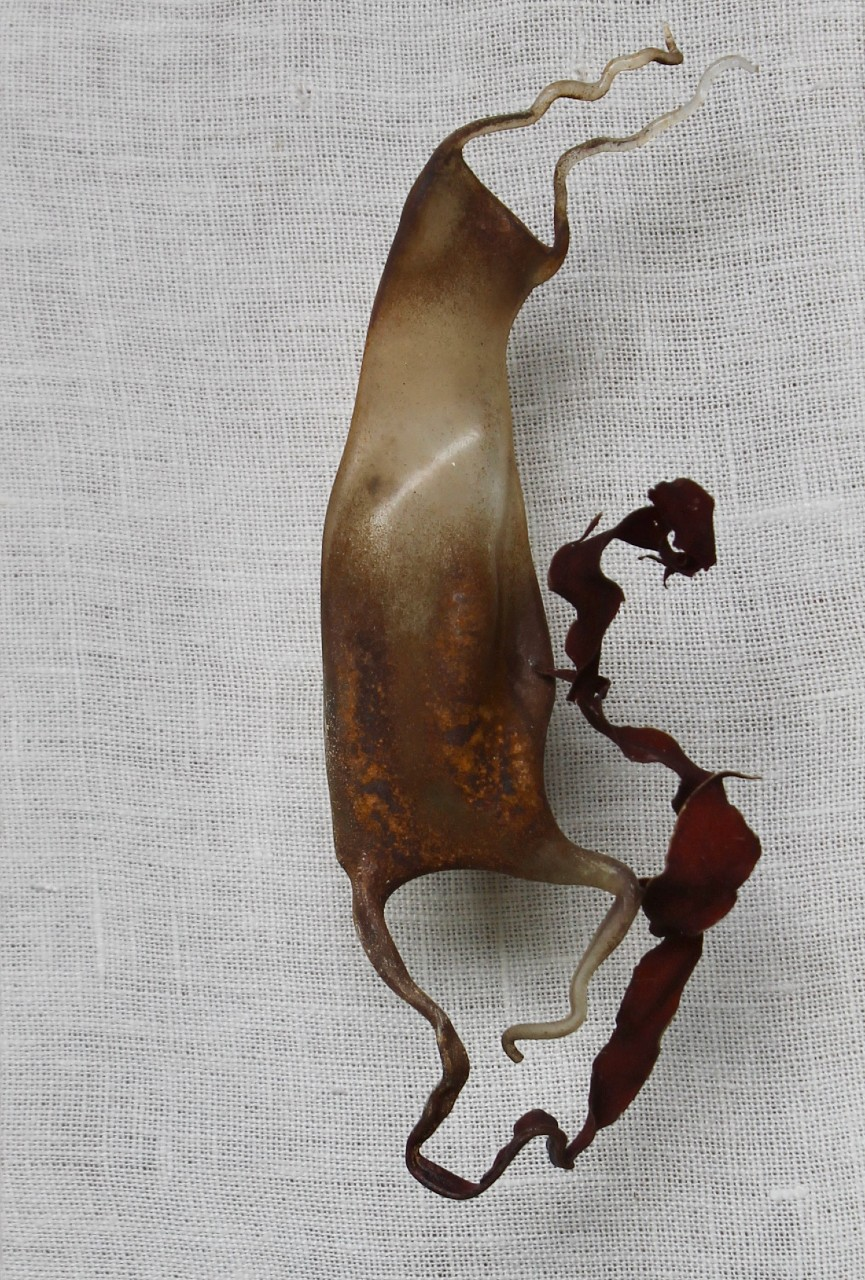 Mermaid's Purse Glass Seaweed Andrea Spencer