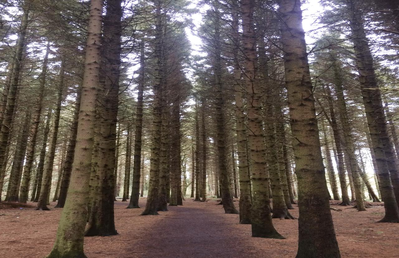 Somerton Forest Northern Ireland with Emma Thorpe