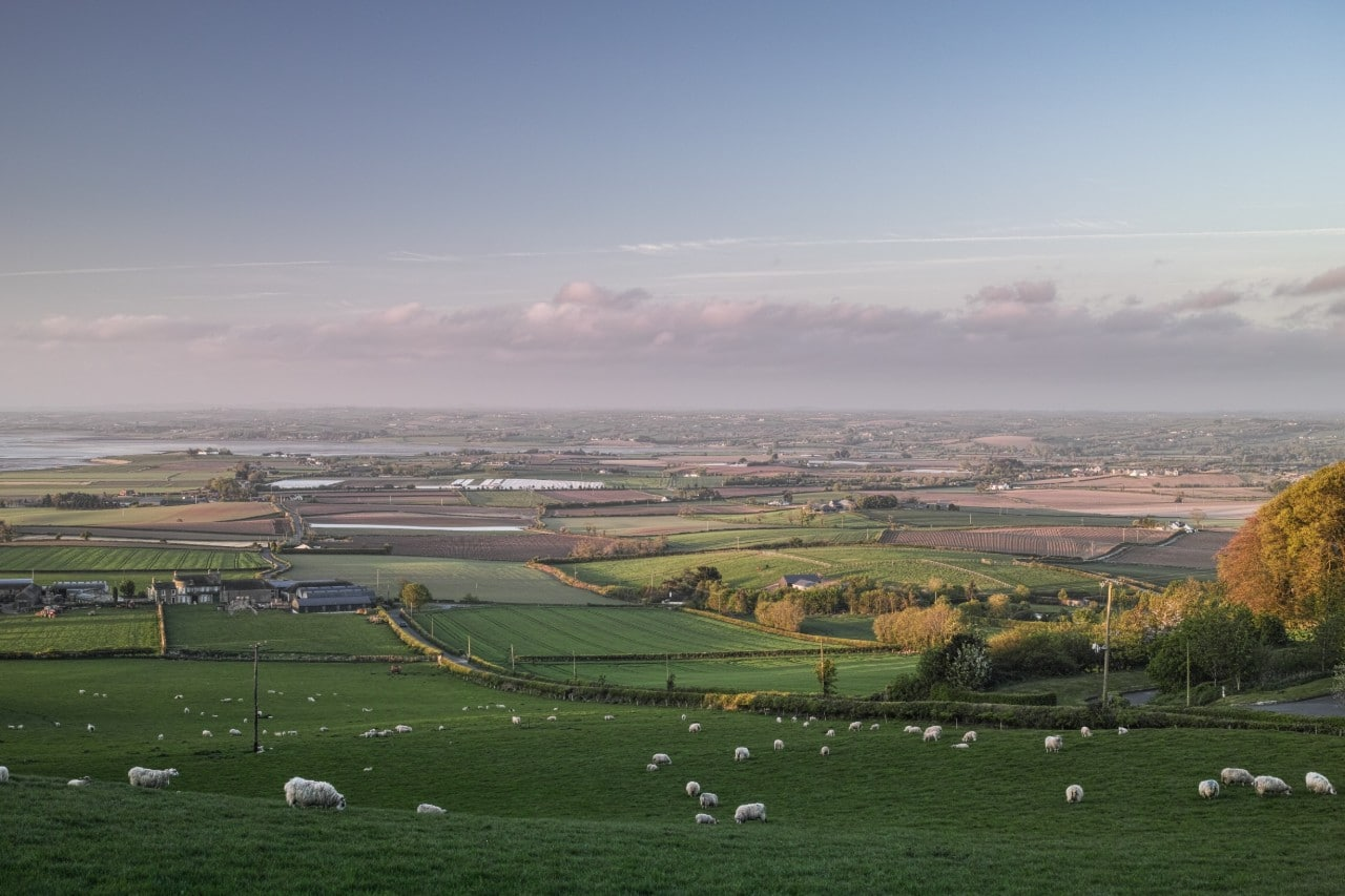 sheep countryside Northern Ireland Malachi O'Doherty