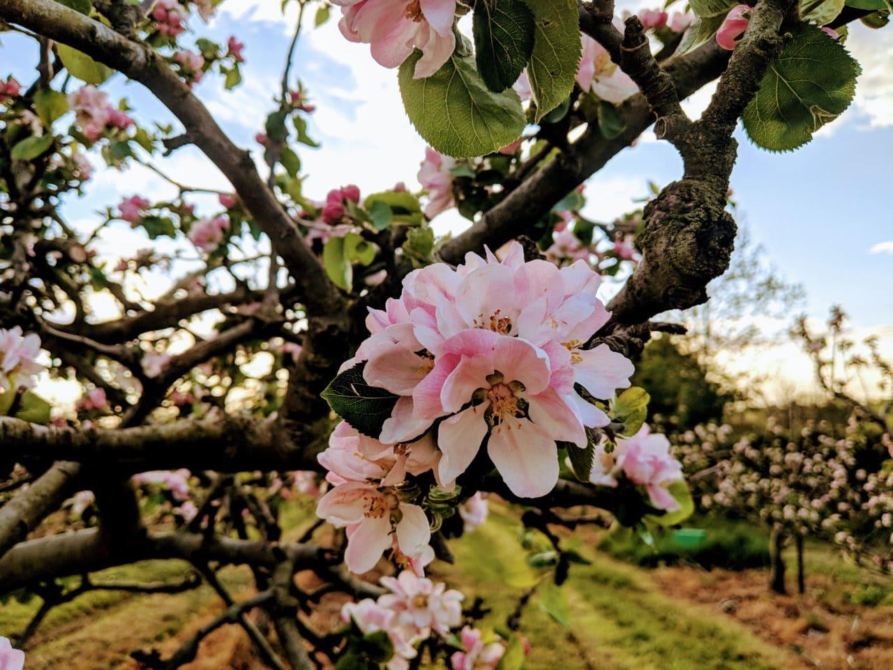 Armagh Orchard County - Byddi Lee