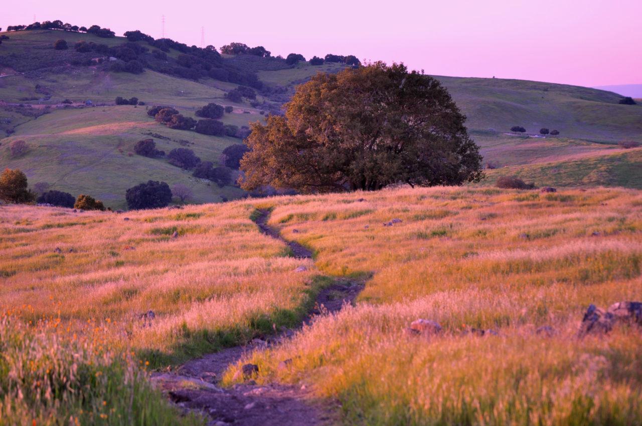 Santa Teresa Foothills San Jose - Byddi Lee